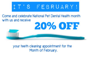 dog dental cleaning